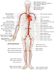 élastique de sport musculaire