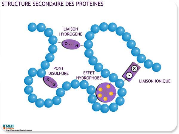 les protéines role