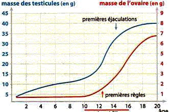 taux masse musculaire femme