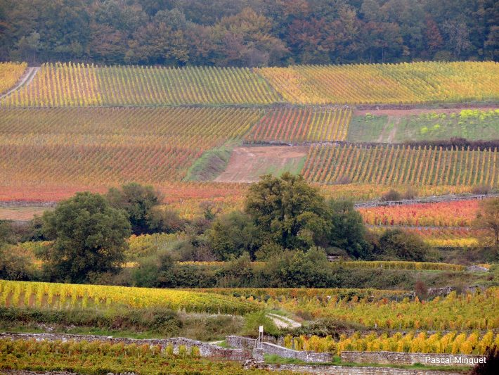 visite vignoble bourgogne